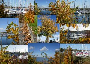 collage-herfst-29okt16